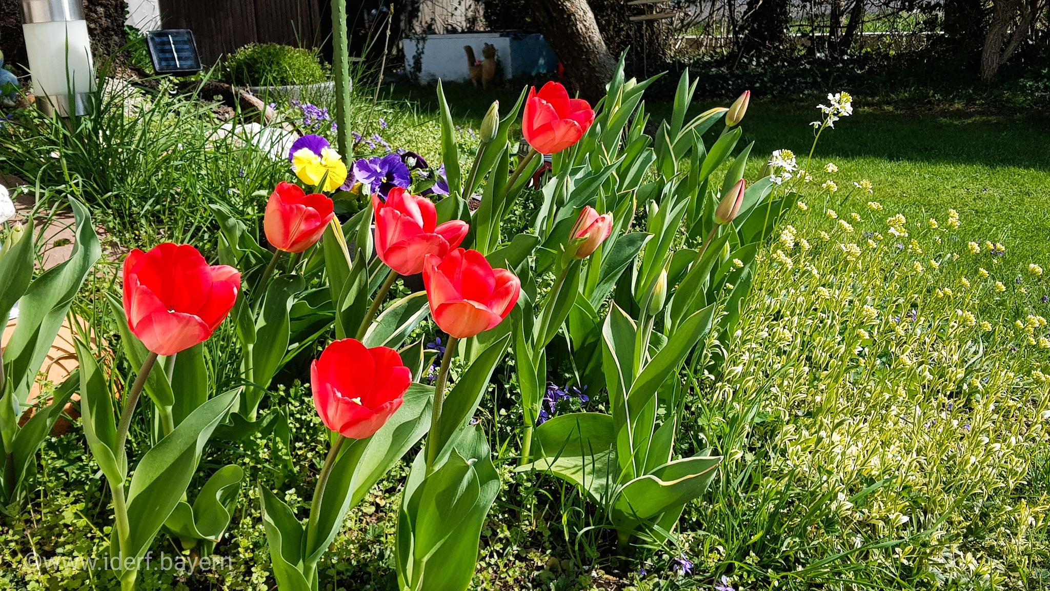 Frühling für Fredo
